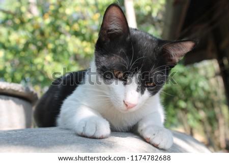 cute cute kitten  #1174782688