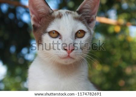 cute cute kitten  #1174782691