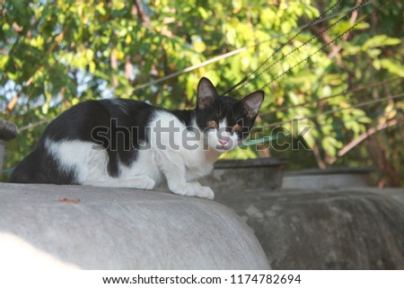 cute cute kitten  #1174782694