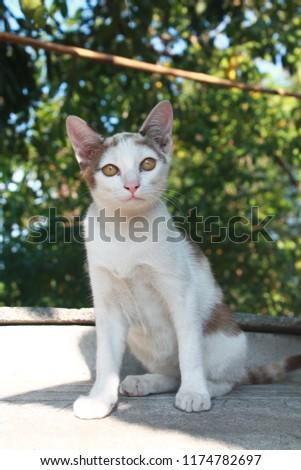 cute cute kitten  #1174782697