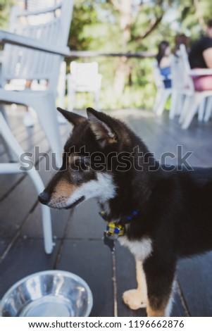 Cute cute puppy #1196662876
