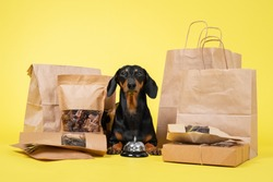 cute dachshund dog, black and tan, sitting among a pile of boxes and packages with dry homemade snacks on a yellow background. advertisement for dish animal delicacies or yummy. Copy space.