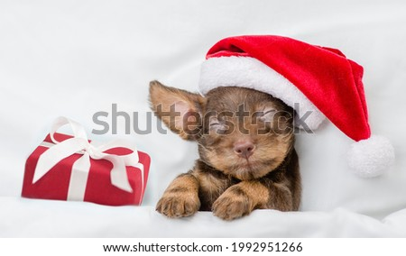 Cute Dachshund puppy wearing red santa hat sleeps with gift box under white blanket at home. Top down view