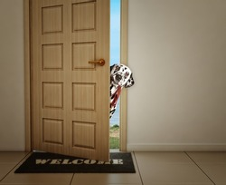 Cute dalmatian dog waiting near the door with leather leash, ready to go for a walk with his owner
