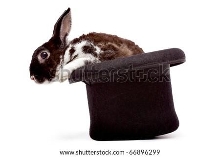 Cute dappled rabbit sitting in a black magician's hat Сток-фото ©