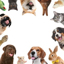 Cute different animals on white background, collage