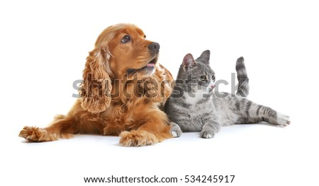 Shutterstock Cute dog and cat together on white background