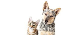 Cute dog and cat together over white looking forwad and tilting head