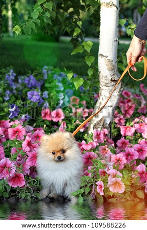 Cute dog and colourful flowers