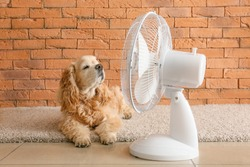 Cute dog and electric fan near brick wall