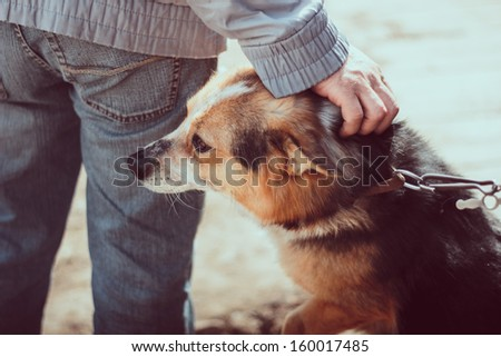 Cute dog and its owner