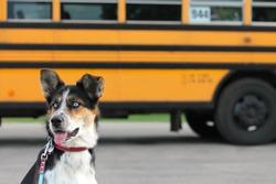Cute dog beside school bus
