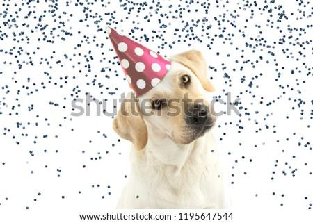 Free Photos A Golden Retriever Puppy Wearing A Happy Birthday Hat