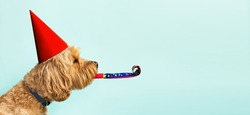 Cute dog celebrating with red pary hat and blow-out against a blue background and copy space to side