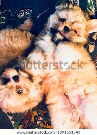 cute dog cute pet love #1391561543