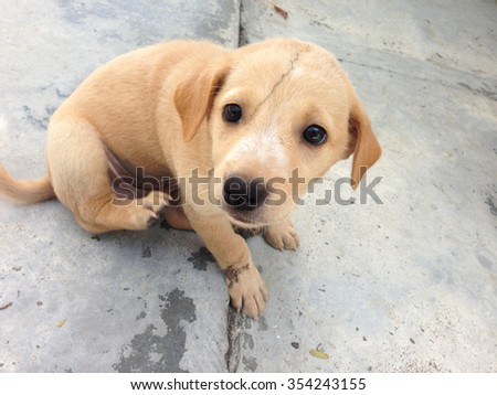 cute dog. cute puppy dog make pity eyes  looking up and siting on concrete