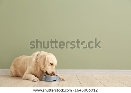 Photo of  Cute dog eating food from bowl near color wall