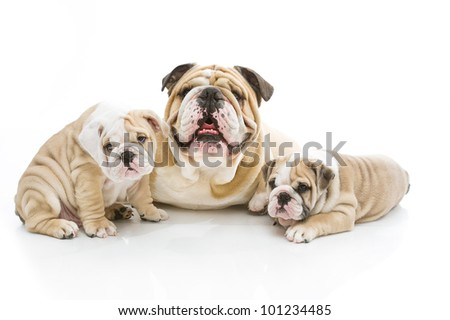 Cute dog family playing isolated