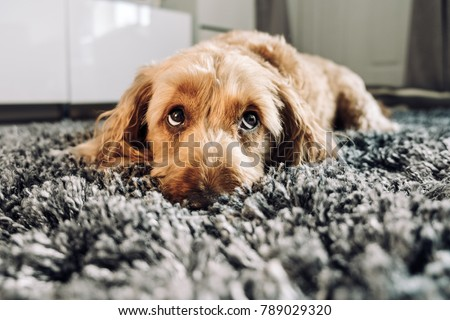 Cute dog giving his best puppy dog eyes. #789029320