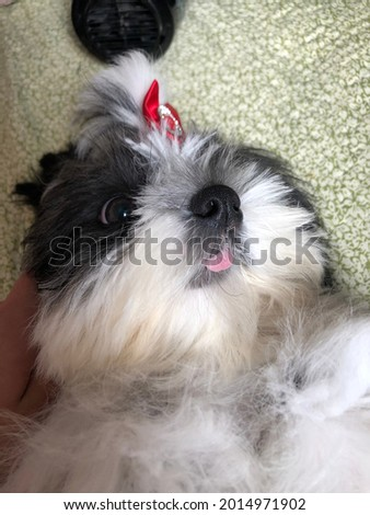 Cute dog, her name's meg Stock fotó ©
