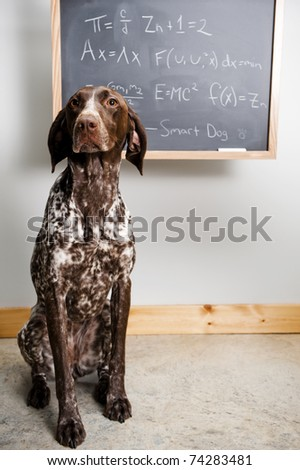 cute dog in front of a chalkboard.  board has math equations written on it.