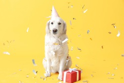Cute dog in party hat and with gift on color background