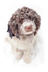 cute dog in snow