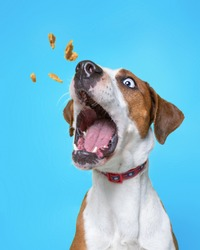 cute dog isolated on a colorful background in a studio shot