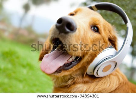 Stock Photo Cute dog listening to music with headphones - outdoors