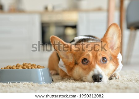 Cute dog near bowl with dry food at home Foto stock ©