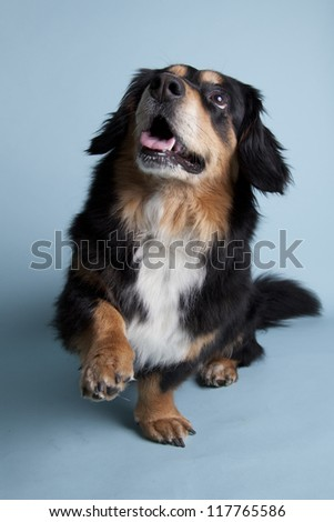 cute dog obeying on colored background