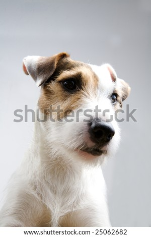 cute dog on a white background