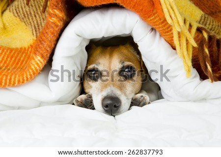 cute dog peeking out from under ...