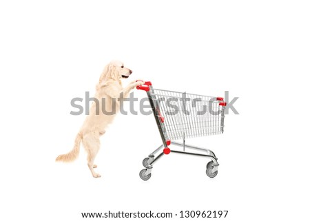 Cute dog pushing an empty shopping cart isolated on white background