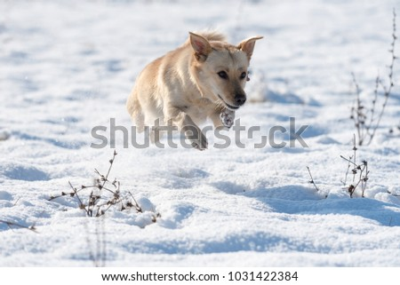 Cute Dog Running And Jumping In The Snow Ez Canvas