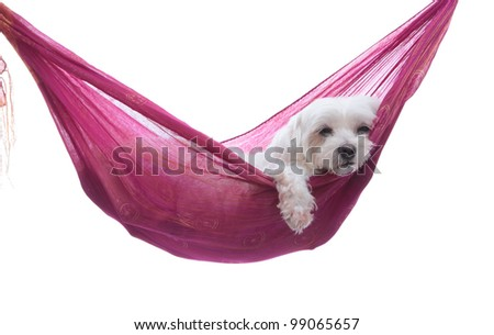 Cute dog siesta or lazing around under a beautiful summer sky