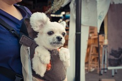 Cute Dog staying in the knapsack or bag by Thai women shopping in market , process in vintage style