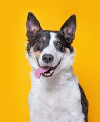 cute dog studio shot on an isolated background