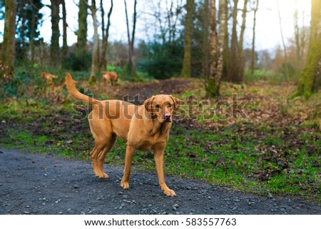 cute dog walking on the street #583557763