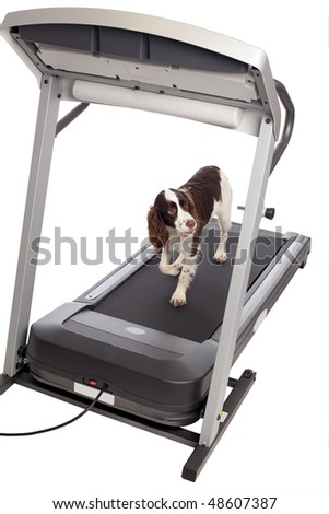 Cute dog walking on treadmill isolated against white background