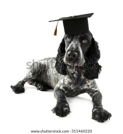 Best Graduation Cap Black Adorable Dog - stock-photo-cute-dog-with-grad-hat-isolated-on-white-education-concept-315460220  Gallery_167463  .jpg