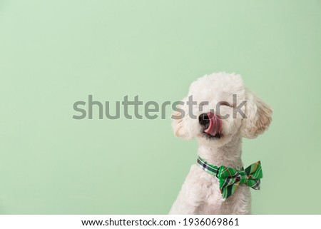 Cute dog with green bowtie on color background. St. Patrick's Day celebration Stock fotó ©