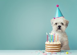 Cute dog with party hat and birthday cake