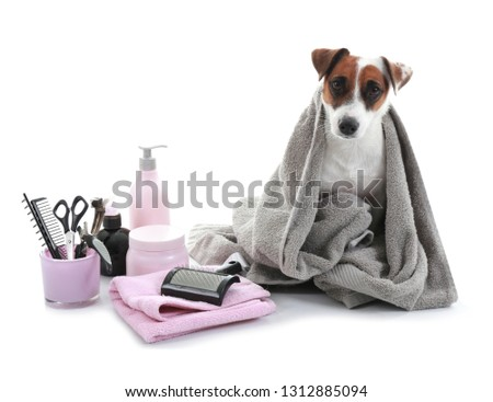 Cute dog with set for grooming on white background