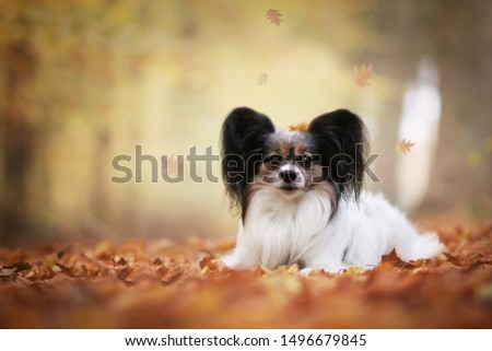 Cute doggie in the autumn park. #1496679845