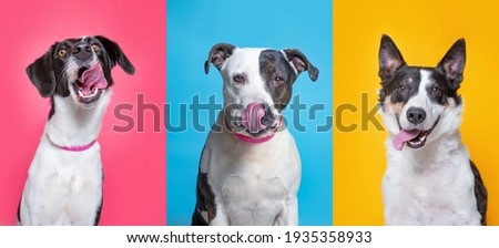 cute dogs studio shot on an isolated background