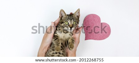 Cute domestic cat in woman hands with paper pink heart in background
