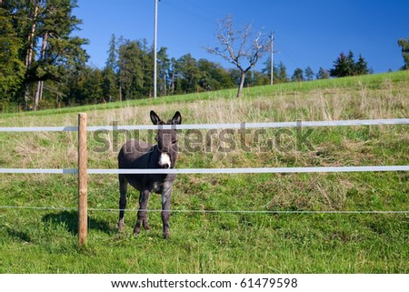 cute donkey on a pasture