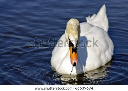 Cute duck in water with amazing colors