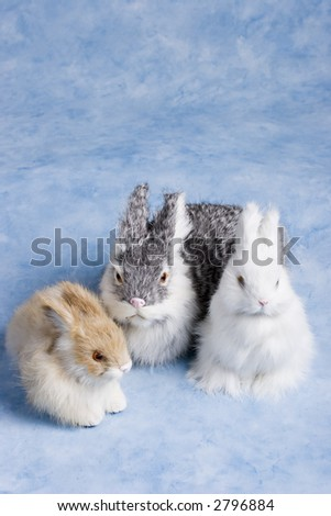 cute easter bunnies on a bright blue background